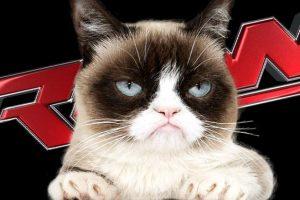 """Grumpy Cat llegará al evento """"Monday Night Raw"""" para promocionar su nueva película Foto:WWE. Imagen Por:"""