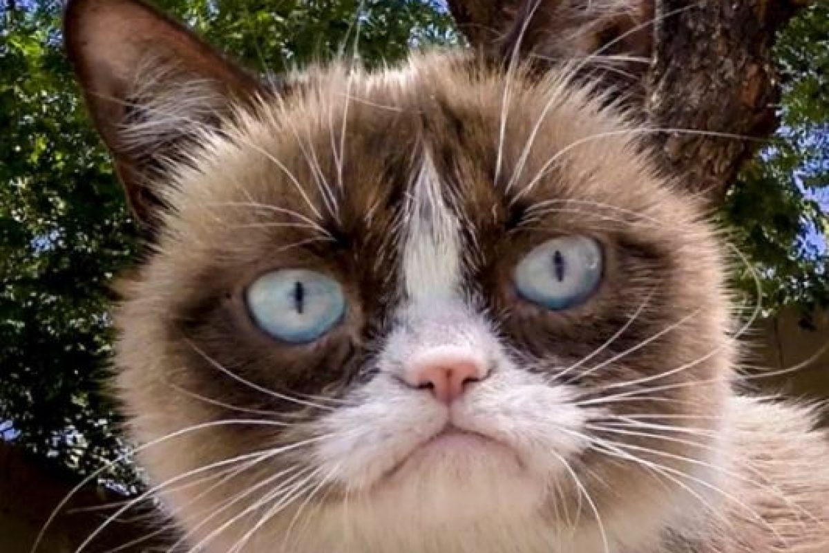 Foto:Instagram/Grumpy Cat. Imagen Por: