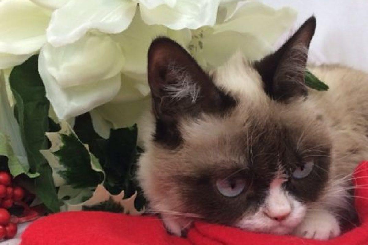 En la cinta, Grumpy es una gatita que nadie quiere adoptar Foto:Instagram/Grumpy Cat. Imagen Por:
