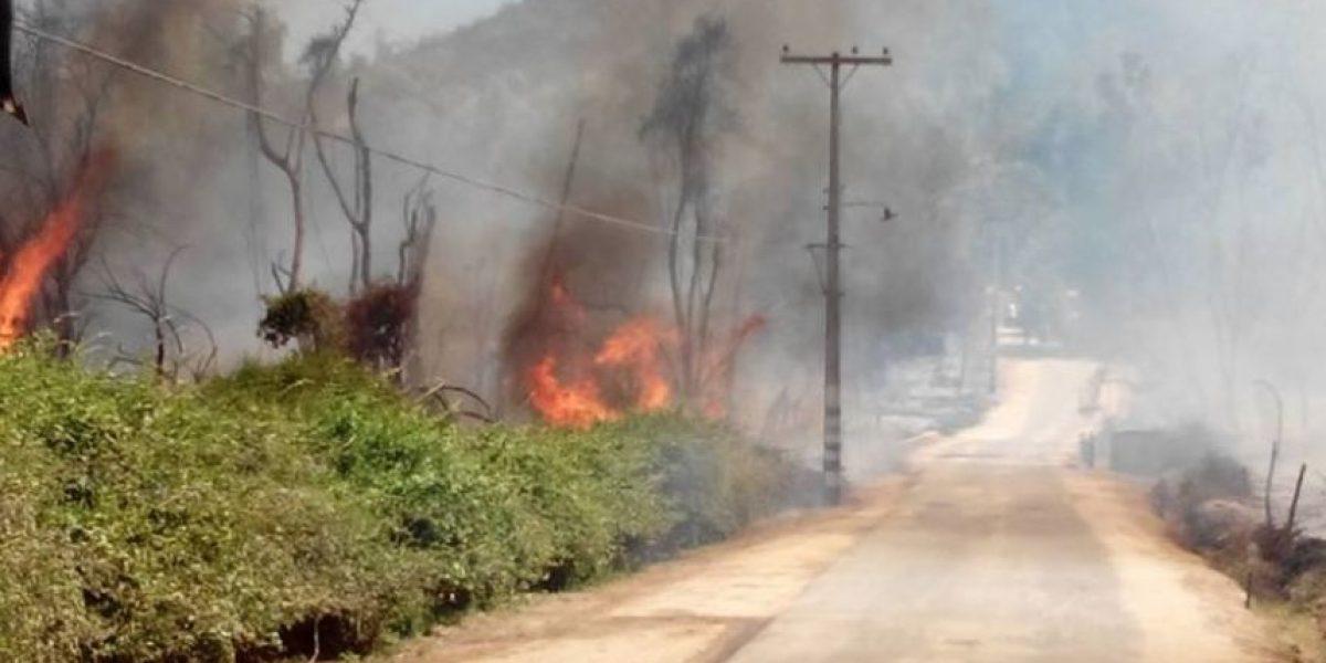 Alerta Roja en Curacaví por incendio forestal