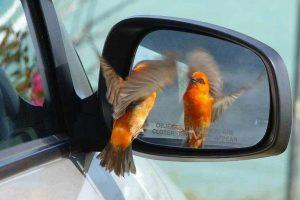Foto: Reproducción / Perfectly Timed Photos. Imagen Por: