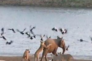 Alla quiere liberarse de las leonas Foto:Youtube/Jesse Nash. Imagen Por:
