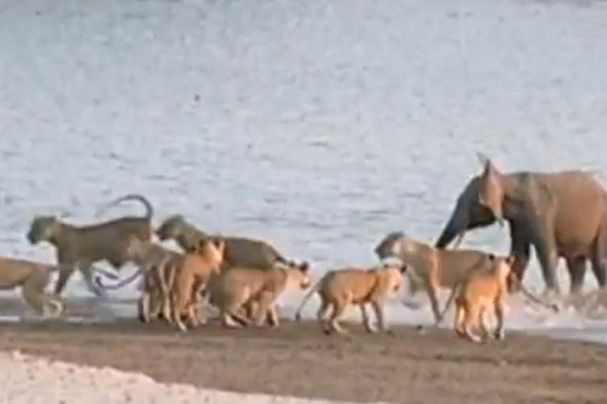 Logra espantarlas por un rato Foto:Youtube/Jesse Nash. Imagen Por: