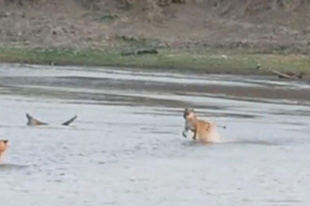 Pero este contraataca Foto:Youtube/Jesse Nash. Imagen Por:
