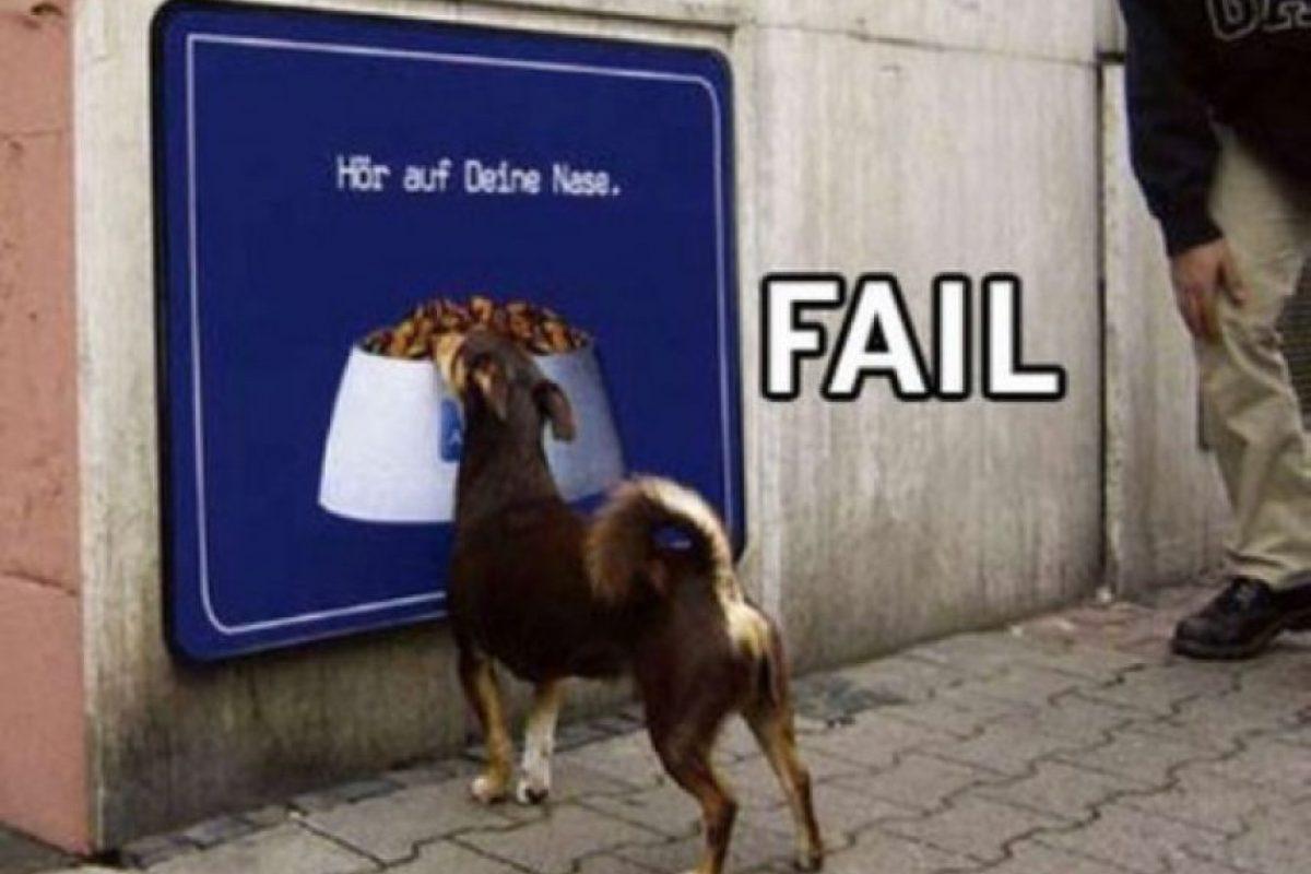 Foto:Cheezburger. Imagen Por: