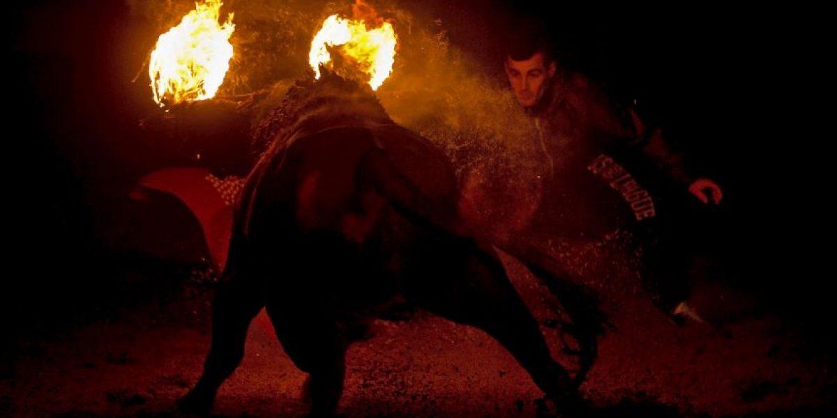 Toro de Júbilo: La fiesta española acusada de quemar bovinos vivos