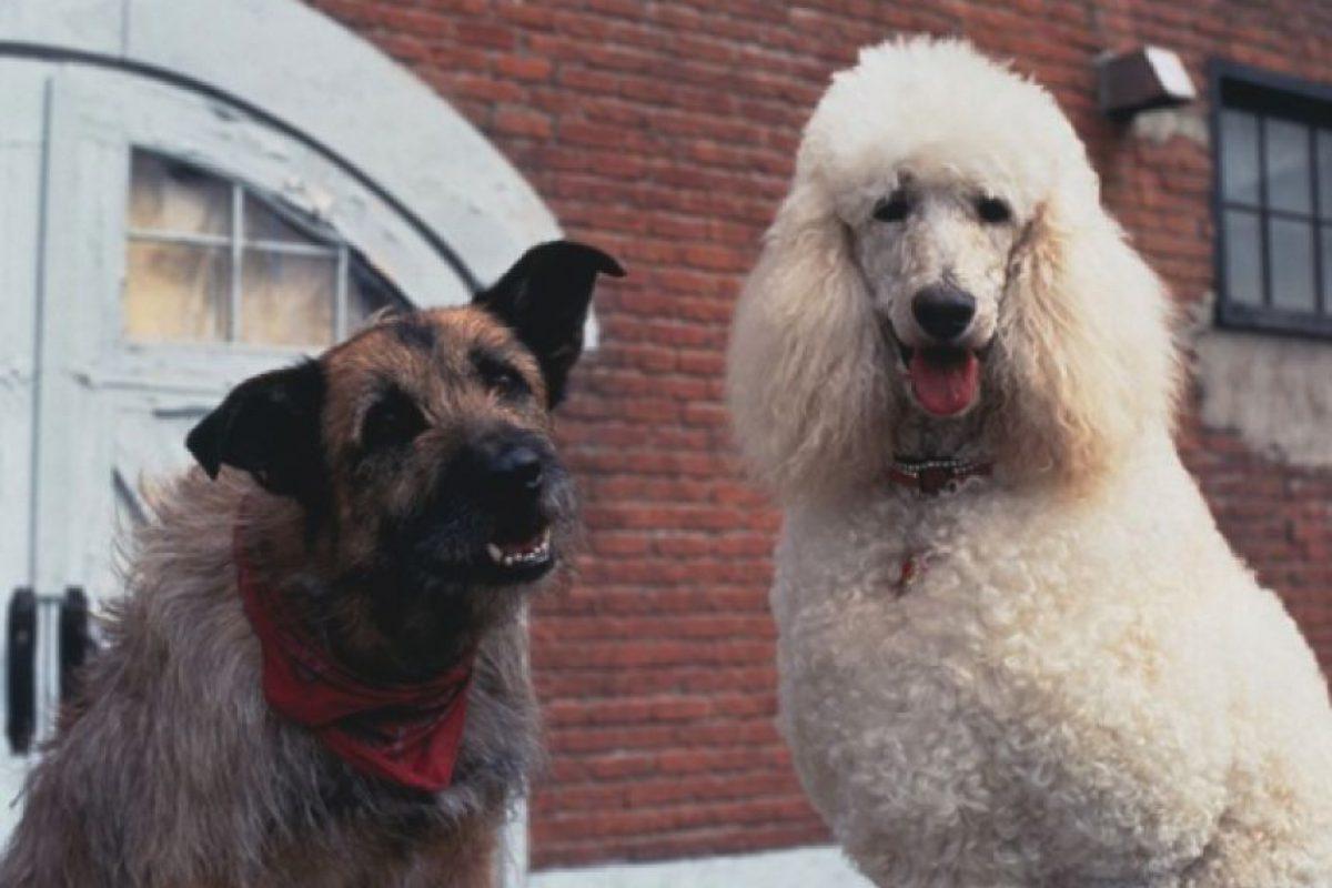 """En 1993 prestó su voz a """"Rocks"""", un perro callejero, en el filme """"Mira quién habla"""" Foto:Twitter. Imagen Por:"""