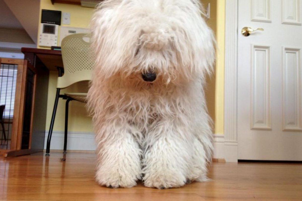 Beast es un perrito que tiene el pelo más hermoso del planeta. Tiene más de dos millones de fans en Facebook. Foto: Vía Facebook. Imagen Por: