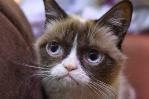 Grumpy Cat es quizás el gato más famoso de Internet. La página oficial de Facebook de esta minina tiene casi siete millones de seguidores. Foto:Vía Facebook. Imagen Por: