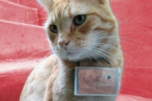 Cooper: Photographer Cat Foto: Vía Facebook. Imagen Por: