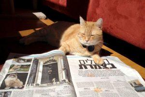 """Este gato """"fotógrafo"""" tiene más de 650 mil seguidores en Facebook. Foto: Vía Facebook. Imagen Por:"""