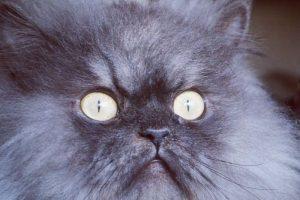 Colonel Meow Foto:Vía Facebook. Imagen Por:
