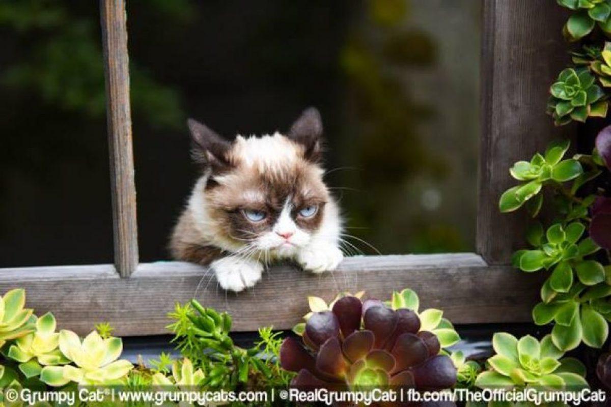 Grumpy Cat Foto:Vía Facebook. Imagen Por: