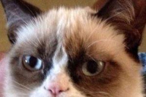 Grumpy Cat, el meme que expresa molestia e inconformidad hacia el mundo o las personas. Foto:Quickmeme. Imagen Por: