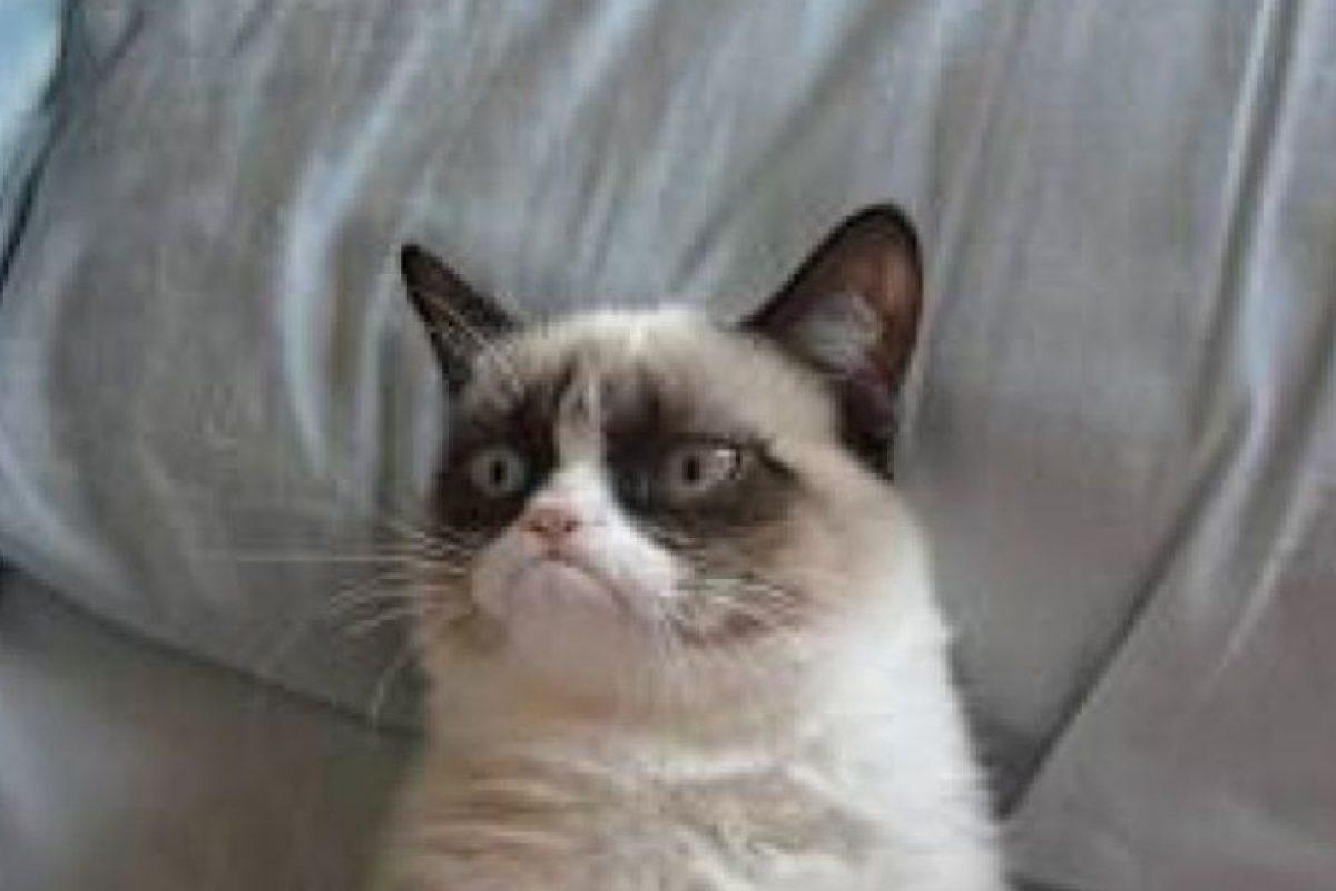 El gato se llama Tard, y pertenece a la californiana Tabatha Bensen. Su imagen se hizo famosa en Reddit y luego se viralizó. Foto:Reddit. Imagen Por: