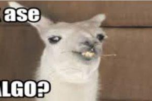 Ola k ase, un meme con una llama para expresar una respuesta ante un situación incómoda, o para burlarse de la mala ortografía Foto:Twitter. Imagen Por: