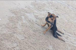 La modelo canadiense Megan Penman encontró a así a Leo en una playa de Tailandia. Foto:HelpSaveLeo/Facebook. Imagen Por: