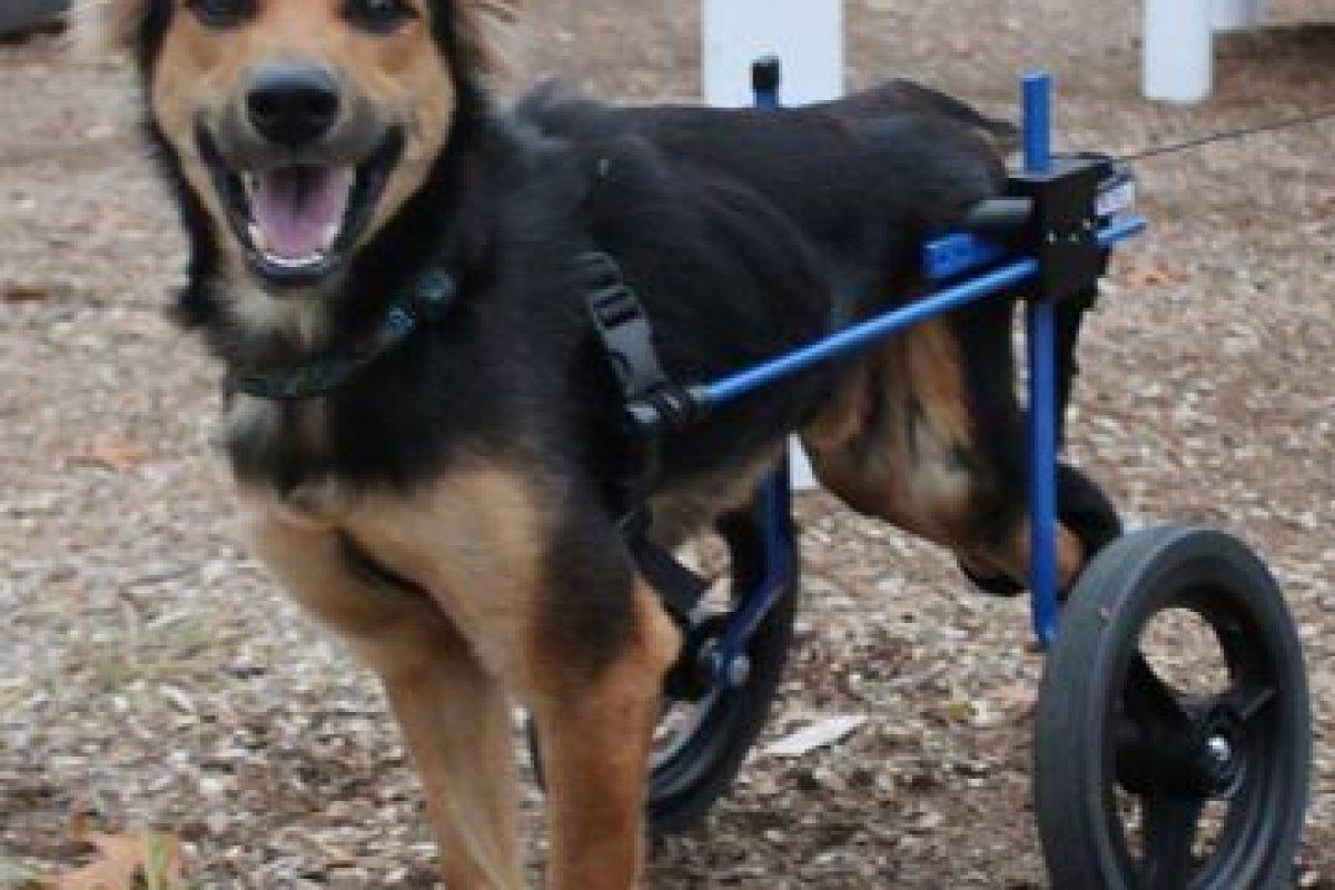 Tiene esta silla de ruedas. Foto:HelpSaveLeo/Facebook. Imagen Por: