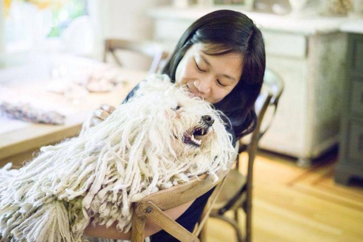 Beast es un perrito que tiene el pelo más hermoso del planeta. Tiene más de dos millones de fans en Facebook. Foto:Facebook. Imagen Por: