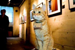 """Este gato """"fotógrafo"""" tiene más de 650 mil seguidores en Facebook. Foto: Facebook. Imagen Por:"""