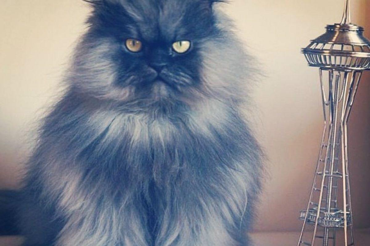 Colonel Meow Foto:Facebook. Imagen Por: