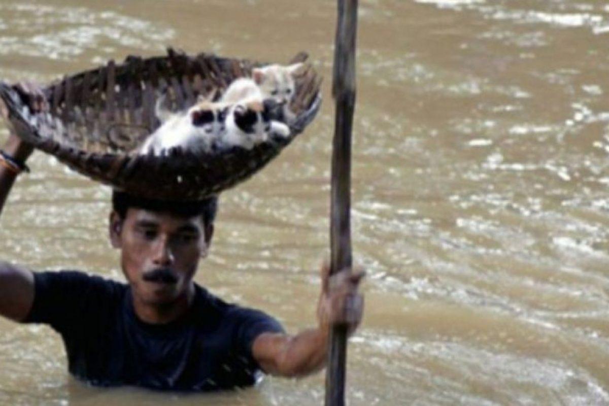 Este hombre indio rescata a unos gatitos en una inundación Foto:AP. Imagen Por: