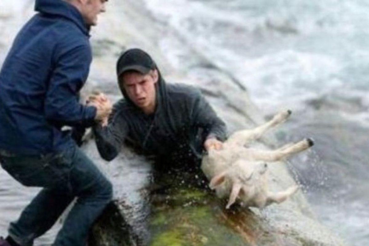 Dos noruegos recuperan a una oveja del mar Foto:Tumblr. Imagen Por: