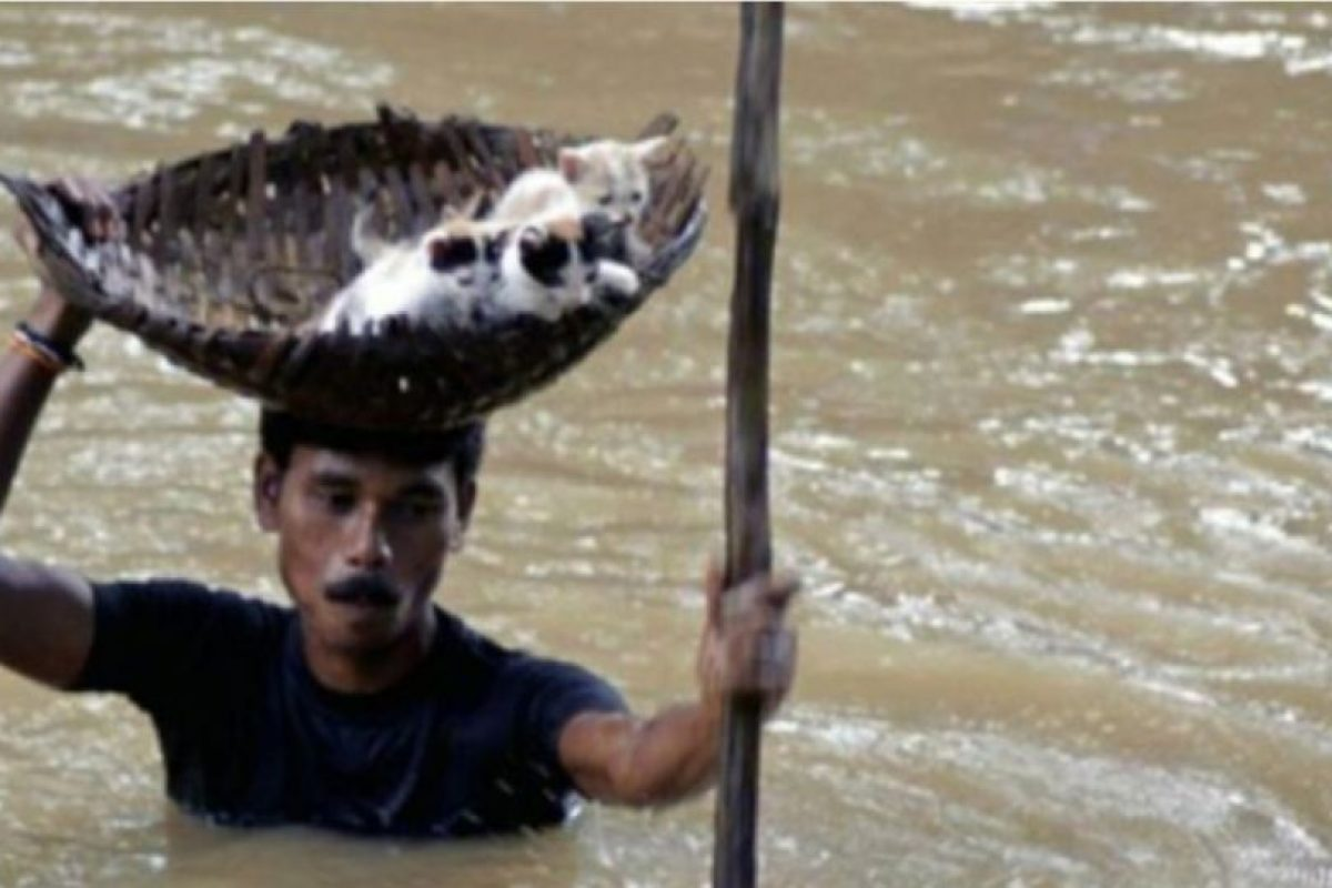Este indio rescata a unos gatitos en inundación Foto:AP. Imagen Por: