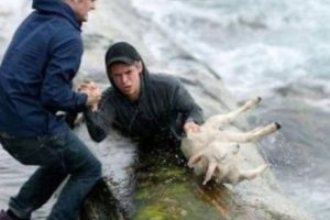 Dos noruegos rescataron esta oveja Foto:Tumblr. Imagen Por: