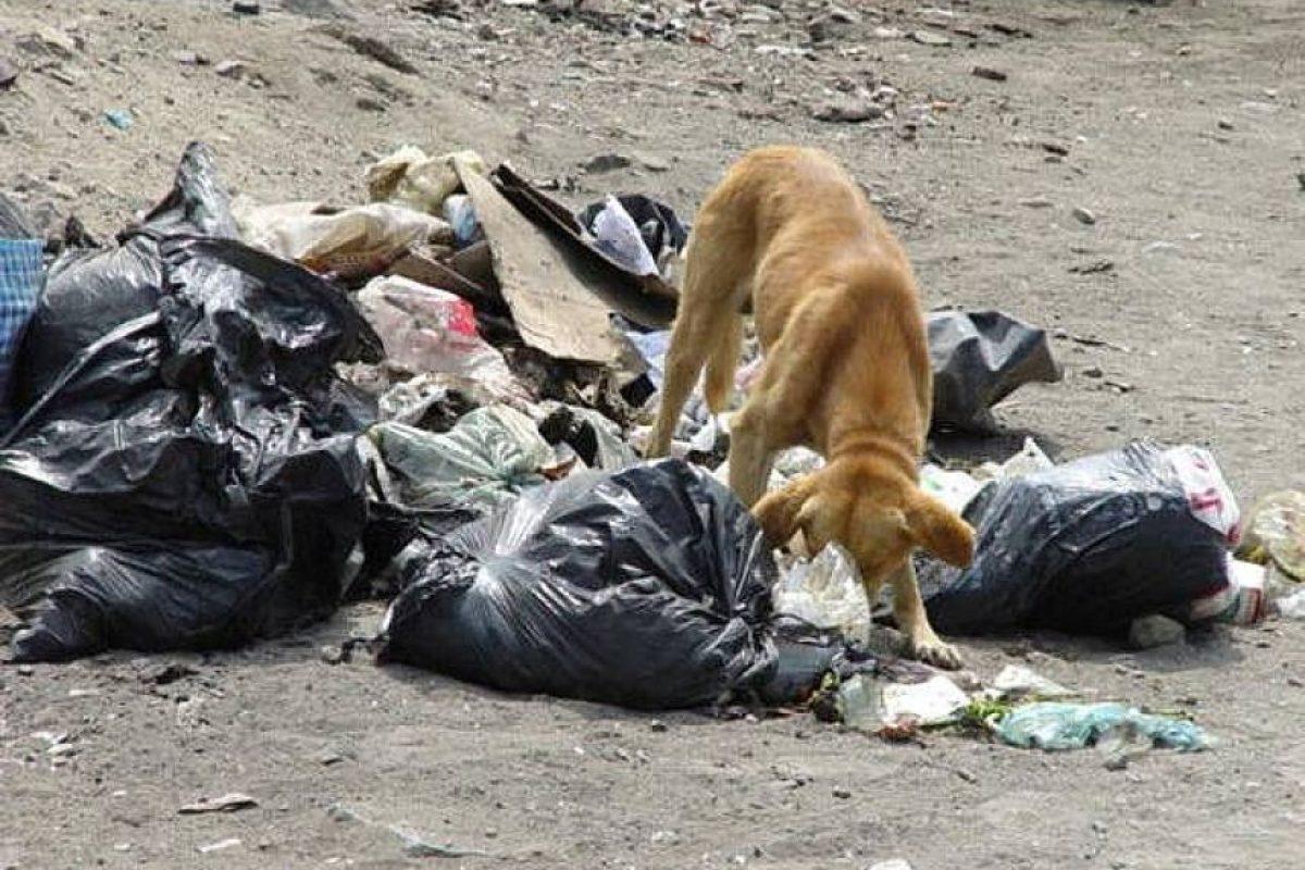 5. Reduces los problemas de basuras causados por perros y gatos hambrientos que buscan alimento entre los desechos. Foto:Wikimedia. Imagen Por: