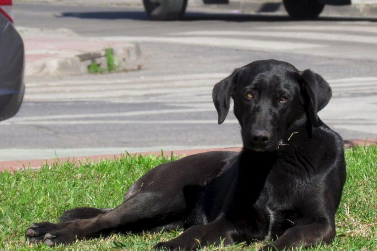 6. El lugar que una mascota de raza comprada ocupa en tu casa, podría ocuparlo un animalito de la calle que necesita protección. Foto:Wikimedia. Imagen Por: