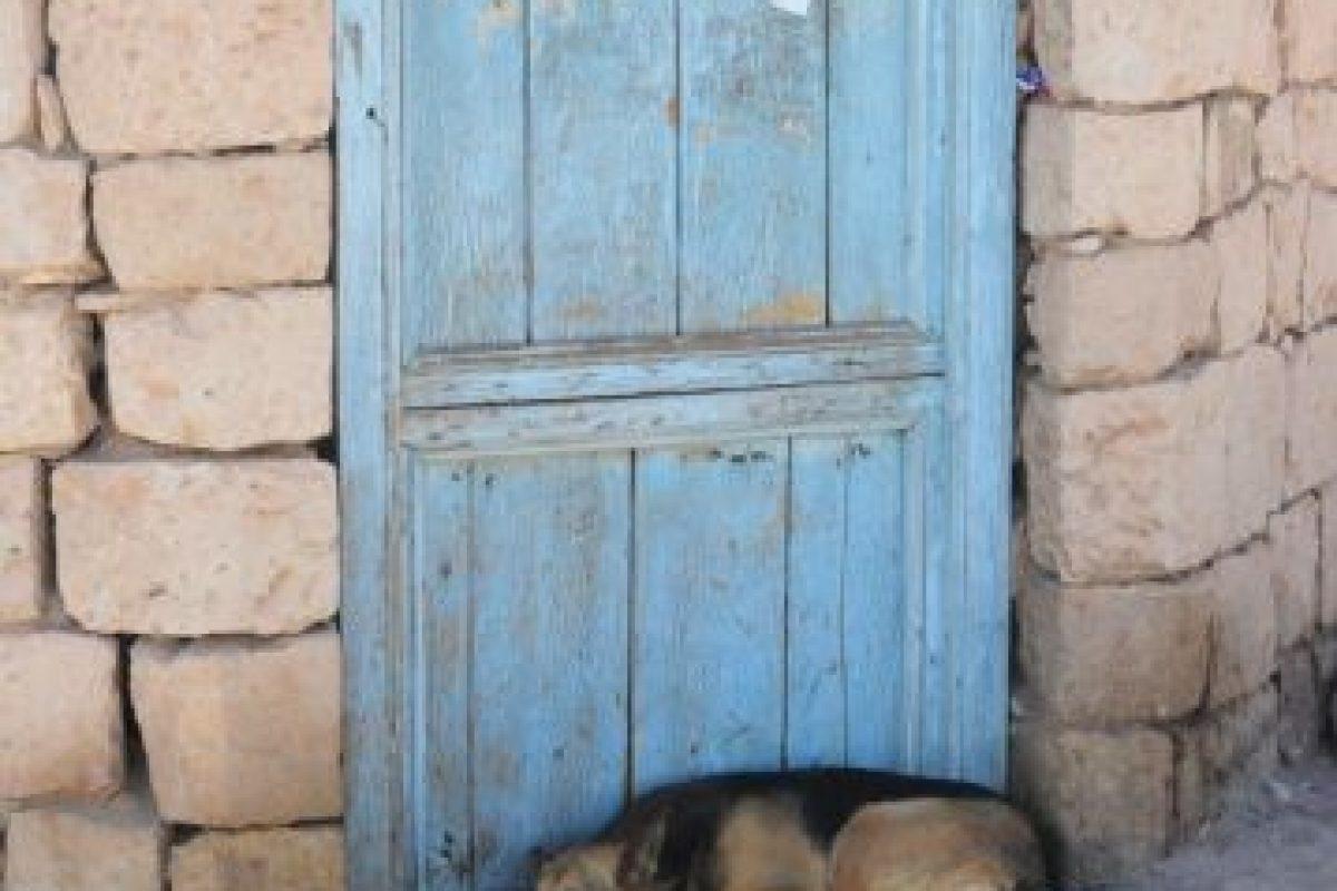 4. Disminuyes el número de sacrificios innecesarios realizados para controlar las poblaciones felina y canina Foto:Wikimedia. Imagen Por:
