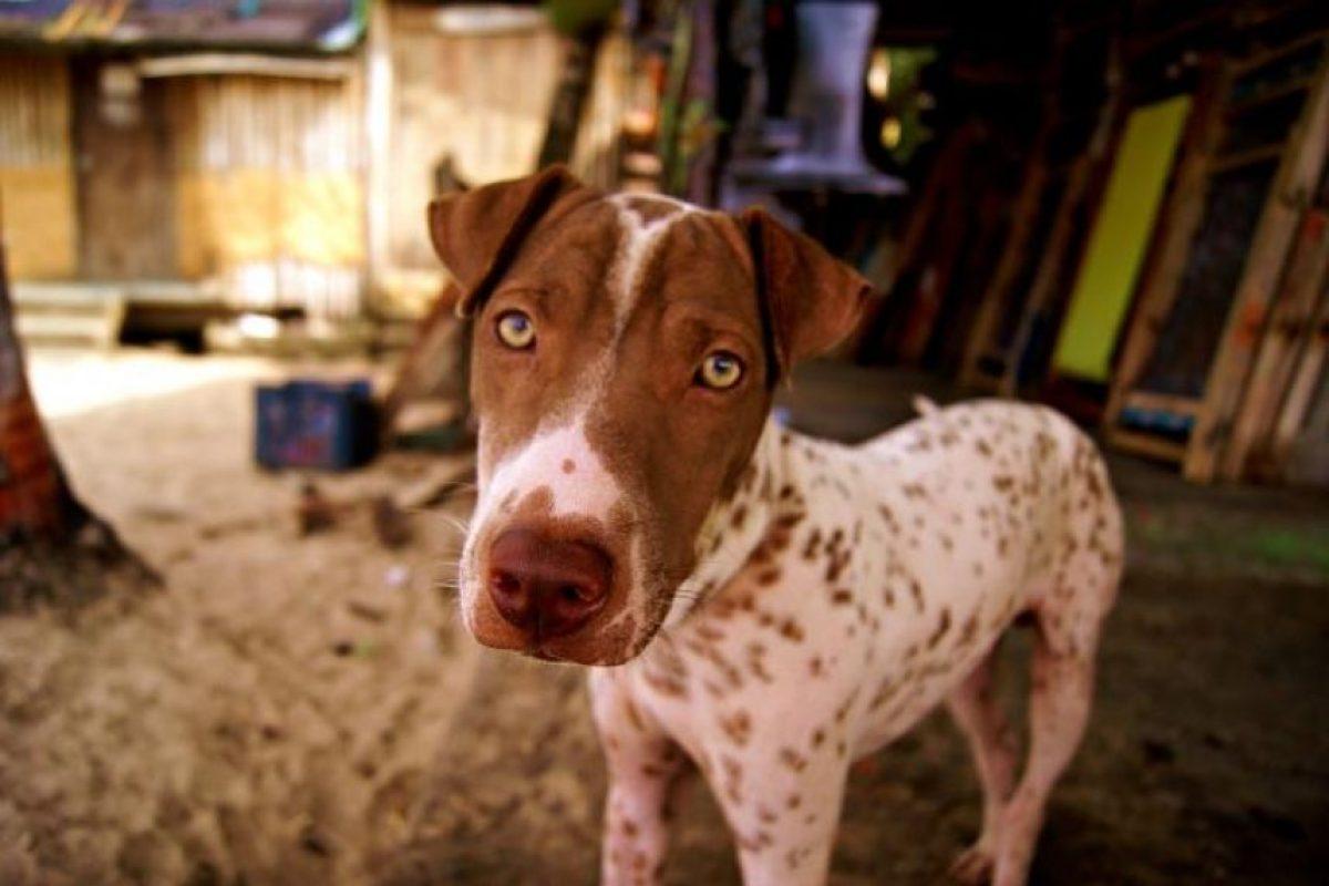 1. Al rescatar un animal de la calle, obtienes un amigo que te lo agradecerá toda su vida Foto:Wikimedia. Imagen Por: