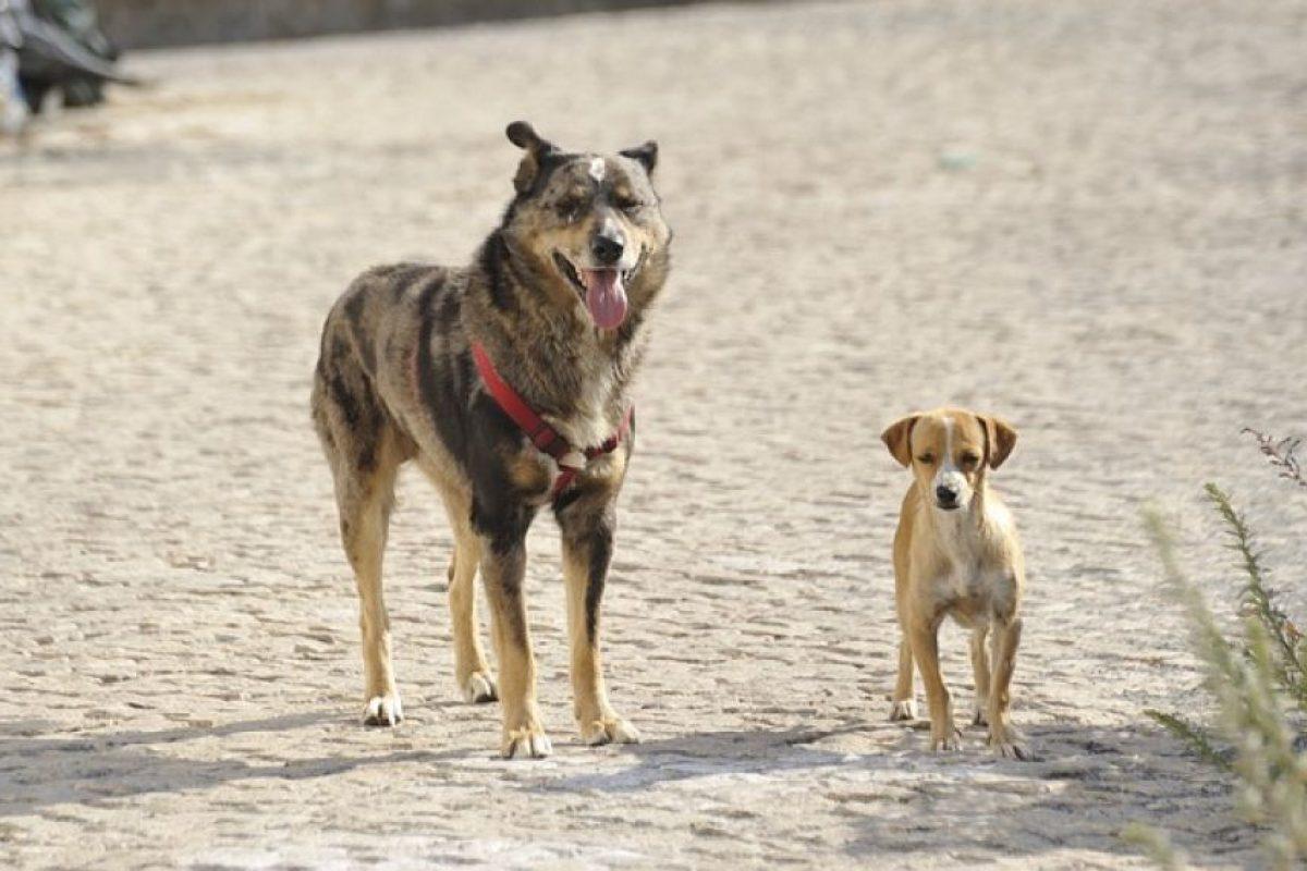 2. Evitas o disminuyes el comercio de animales. Foto:Wikimedia. Imagen Por: