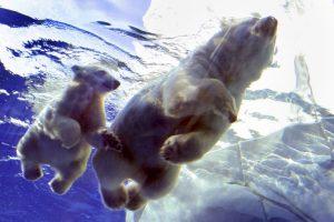 10. De esta forma, los animales se preparan para el invierno. Foto:Getty. Imagen Por: