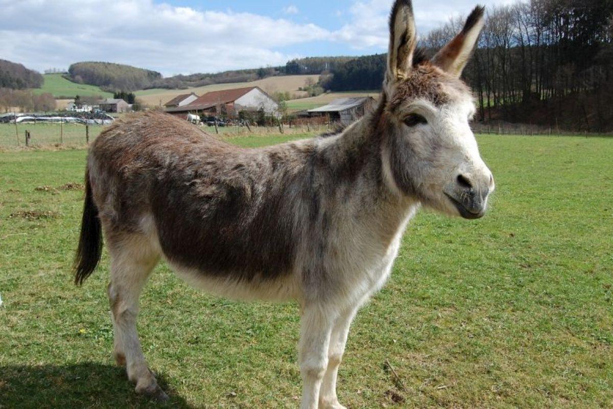 """""""Golpe del burro"""" (Donkey Punch) : Mientras una persona tiene sexo oral con la otra en la posición """"perrito"""", recibe un fuerte golpe en la cabeza. Foto:Wikipedia. Imagen Por:"""
