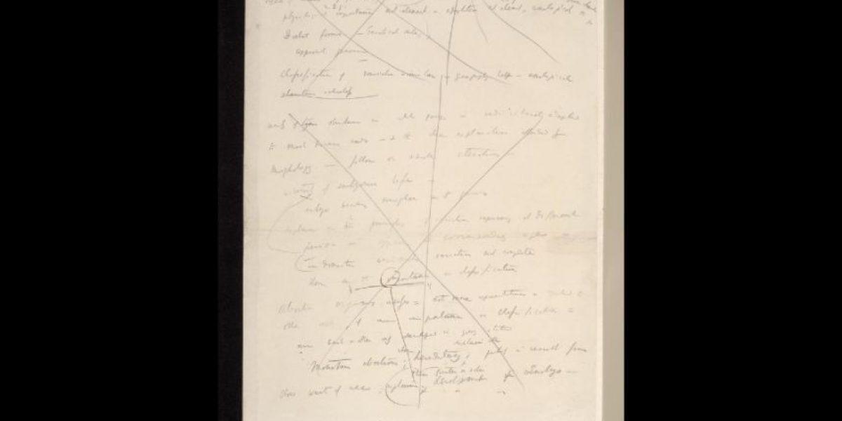 Manuscritos de Darwin y su teoría de la evolución gratuitos en internet