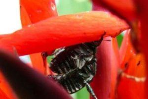 Los escarabajos también entran allí Foto:Getty Images. Imagen Por: