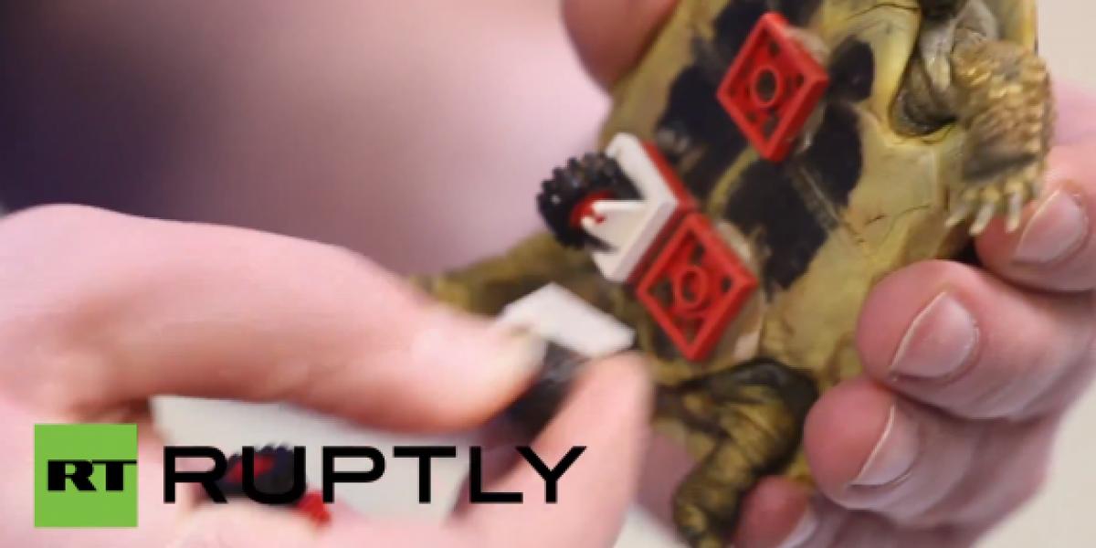 Ruedas de Lego ayudan a una tortuga