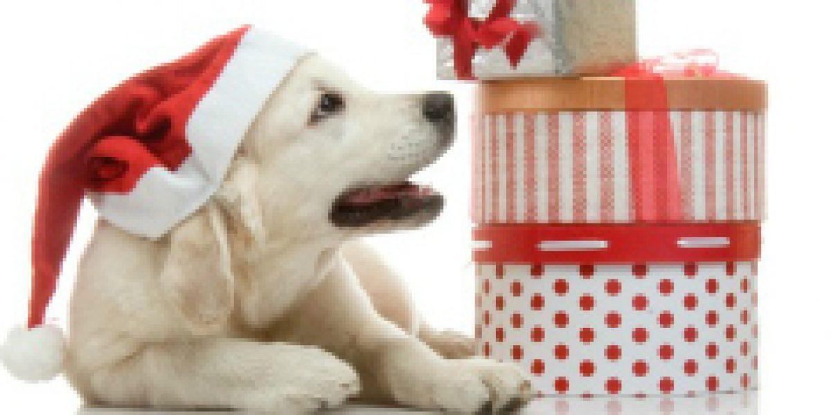 Regalos top para regalonear a las mascotas en esta navidad