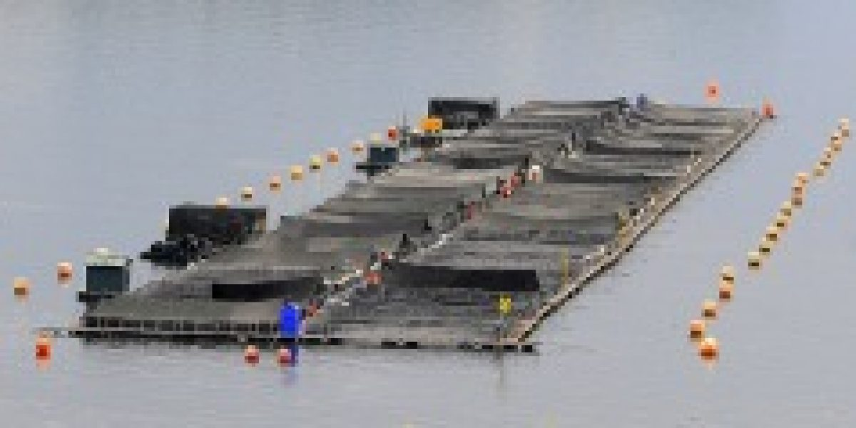 Se concreta la compra de Acuinova Chile por parte de Marine Harvest
