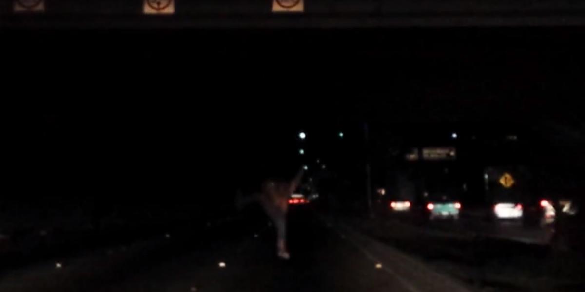 Hombre salta de un puente y no le pasa nada