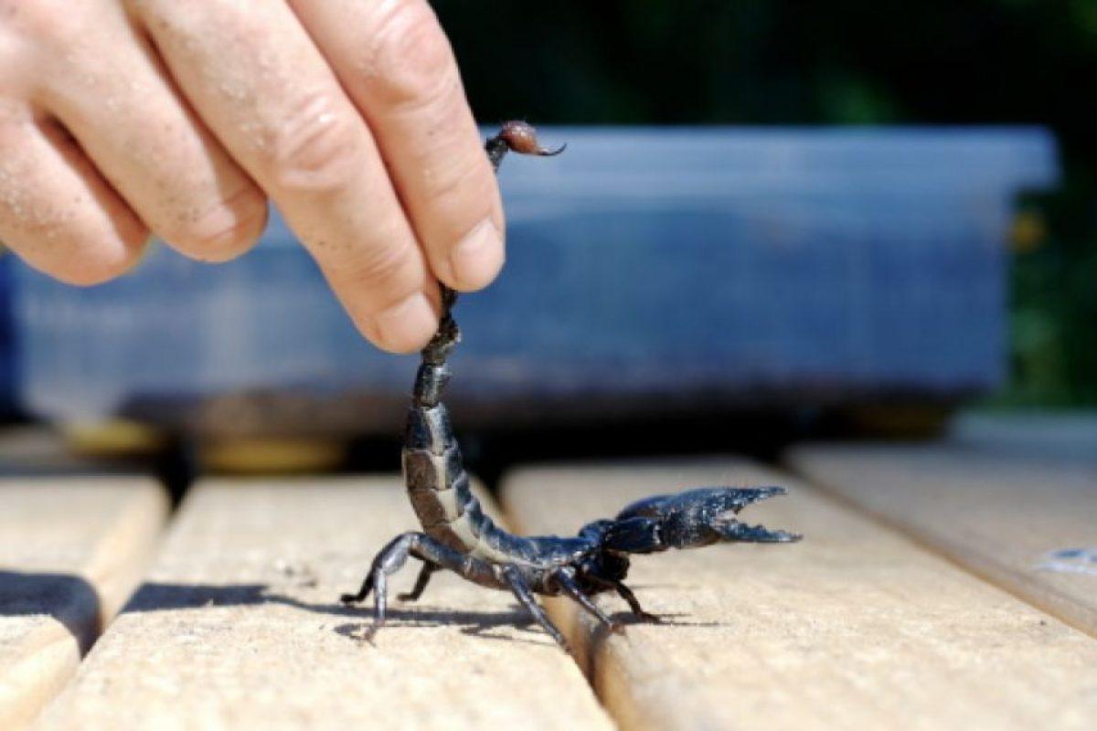 Muerden los escorpiones