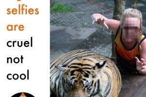 Estas imágenes representan una vida llena de crueldad para el animal Foto:Facebook/World Animal Protection. Imagen Por: