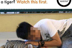 """La asociación protectora de animales """"World Animal Protection"""" pide que los turistas no se tomen selfies o fotografías con animales salvajes Foto:Facebook/World Animal Protection. Imagen Por:"""