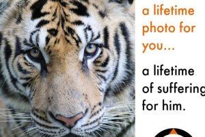 """""""Una foto en tu vida, es una vida de sufrimiento para ellos"""". Foto:Facebook/World Animal Protection. Imagen Por:"""
