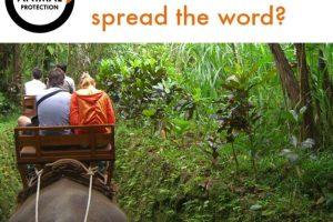 Elefantes que incluso trabajan como medio de transporte Foto:Facebook/World Animal Protection. Imagen Por: