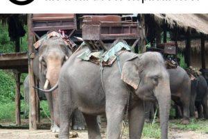 Foto:Facebook/World Animal Protection. Imagen Por: