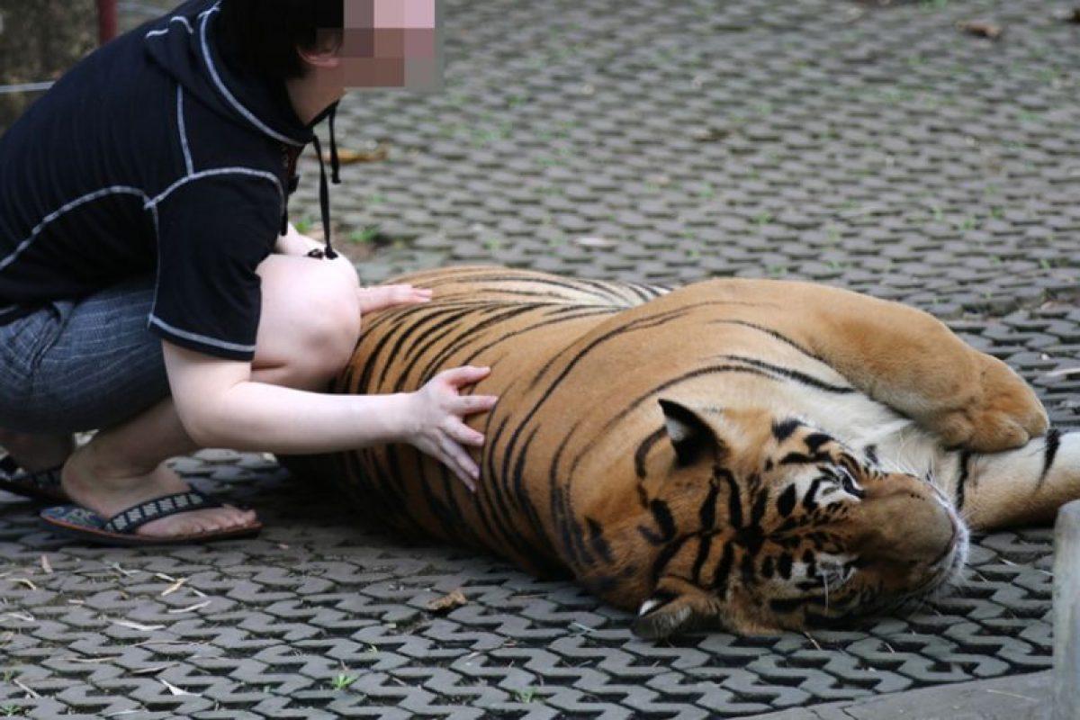 Por ello, esta fundación recomienda no contribuir al entretenimiento con animales Foto:Facebook/World Animal Protection. Imagen Por: