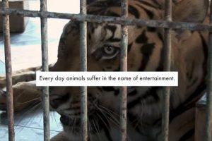 """""""Cada día un animal sufre en nombre del entretenimiento"""" Foto:YouTube/ World Animal Protection. Imagen Por:"""